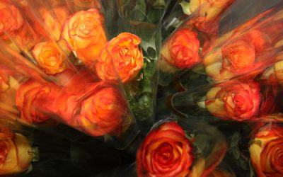 Zonta Woodstock Sells 750 Roses for IWD